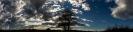 Panorama, Baum am Weg