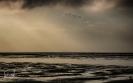 Vogelschwarm im Abendlicht