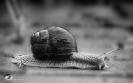 Just a snail...