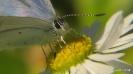 Schmetterling beim Essen
